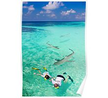 Snorkeling with sharks in the Maldives Poster