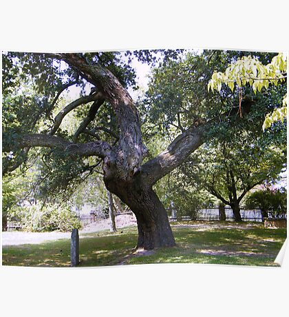 Crooked Tree Poster