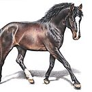 Hannoveraner Horse by Nicole Zeug