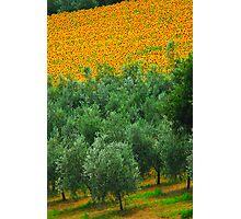 Diagonal Tuscany Photographic Print