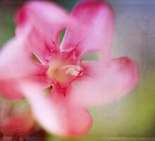 Oh Happy Day by Laurie Search