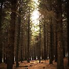 Through the trees - Beacon Fell by David Jones