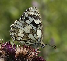 Backlit marbled white  by Neil Ludford