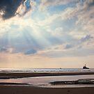 Evening sun - Cleveleys Beech by David Jones