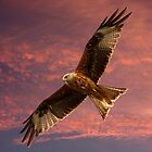Red Kite at Night, Shepherds Delight by Mark Hughes