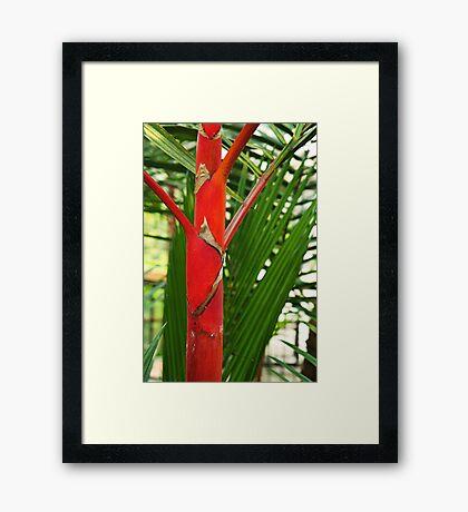 Red palm Framed Print