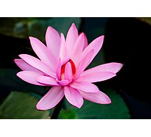 Show Off - pink waterlilly Photographic Print