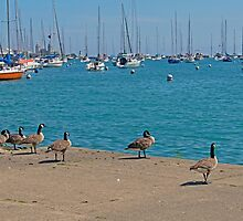 Geese on the Dock by WeeZie