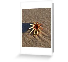 Beach Rose Greeting Card