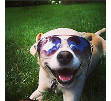 Happiest Dog on Earth Photographic Print