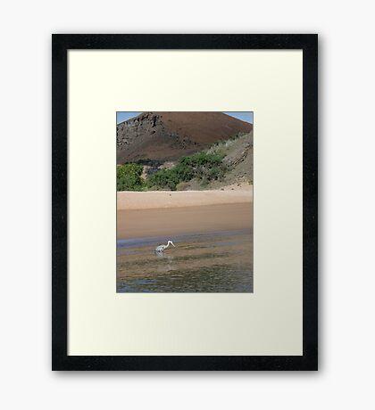 Galapagos Wildlife Framed Print