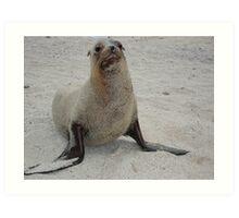 Sandy Sea Lion Art Print