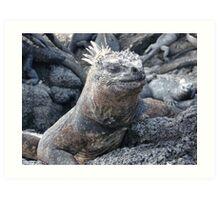 Galapagos Marine Iguana Art Print