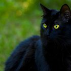 Black Beauty - Skippy outdoors by Megan Noble