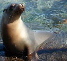 Sea Lion in the Water by Ccarter13