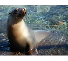 Sea Lion in the Water Photographic Print