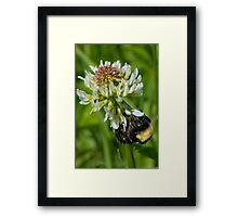 Workin' My Way To The Top Framed Print