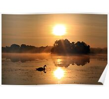 Swan Mist - The Glory of Autumn Poster