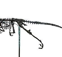 Monstrous Deinonychus by skeletonsrus