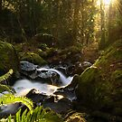 Sun beams by ToddDuvall