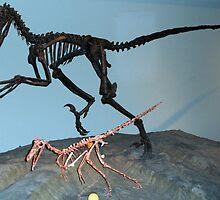 Pretty Deinonychus by skeletonsrus