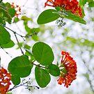 Lantana Flowers by dez7