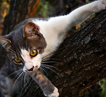 Cat Climbing on a Tree by Byzas