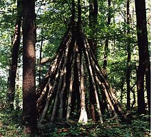 Tree Stack, Montague, New Jersey, 2008 by Elizabeth Gokay