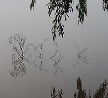 That foggy morning V, Goldfields Reservoir by RachelAlexandra