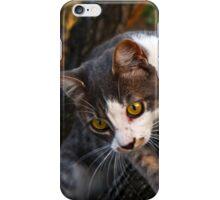 CAT CLIMBING TREE iPhone Case/Skin