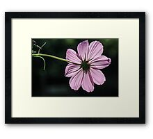 Cosmo and Shadows Framed Print