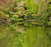 Reflections of a Garden by Ian Robertson