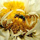 Little Green Bee by shimschoot