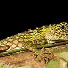 Green Tree Lizard by Dean Mullin
