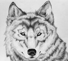 Timber Wolf Gaze by MarianneVasko