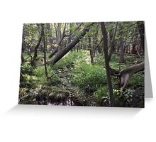Naturescape 57 Greeting Card