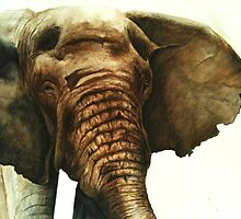 Elephant Close Up by MarianneVasko