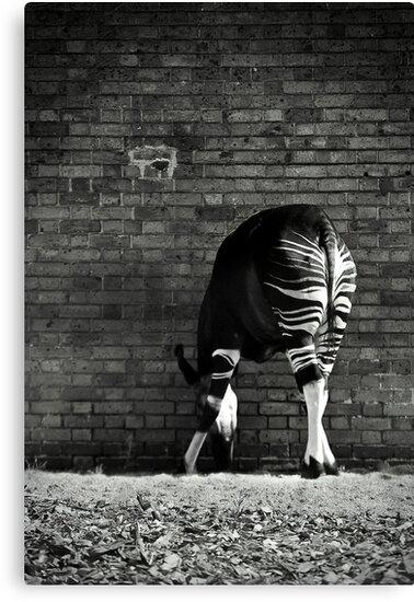 Okapi by Damienne Bingham