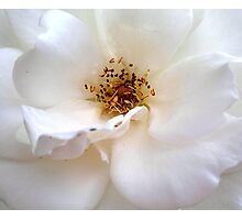 White Wonder Photographic Print