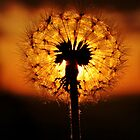 Dandelion Delights by Amy Dee