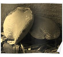 Mushrooms in Sepia - South Florida Poster
