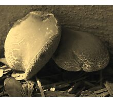 Mushrooms in Sepia - South Florida Photographic Print