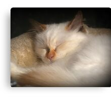 Dreaming Of Mice Perhaps? Canvas Print