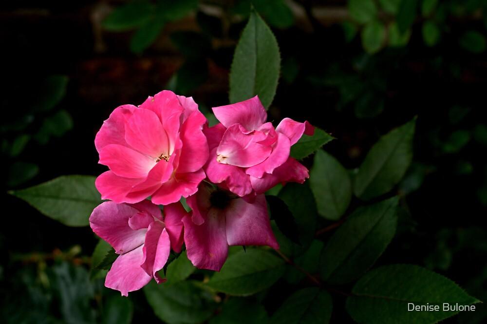 Pink Petal Flower - Elizabethan Gardens, NC by Denise Bulone
