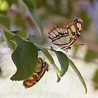 Butterflies on a branch by lizzclements