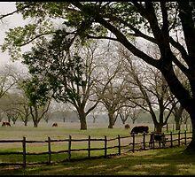 Texas cow pasture by lizzclements