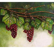 Grapevine Oil Painting Photographic Print