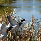 Ducks in Flight by Brad Sumner