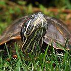 Turtle by Jessica Liatys