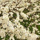 May you blossom always. by Fara